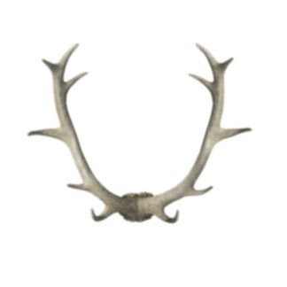Bjorn Antler Wall Art White