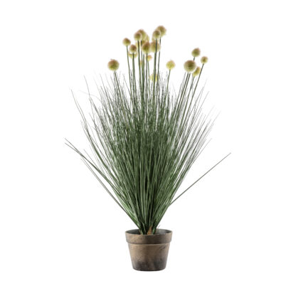 Potted ball Grass with 20 Heads Yellow