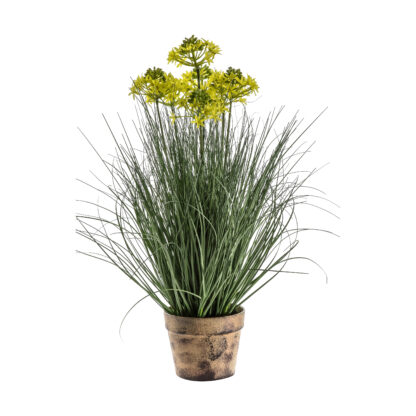Potted Grass with 7 Heads Yellow