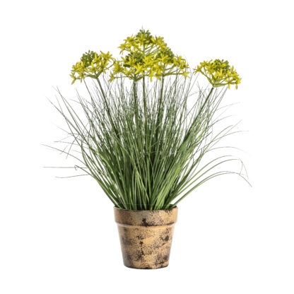 Potted Grass with 5 Heads Yellow