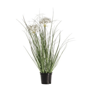 Potted Grass with 2 Heads Yellow