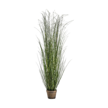Potted Onion Grass Green