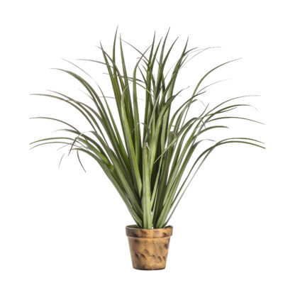 Potted Dracaena Silver Green