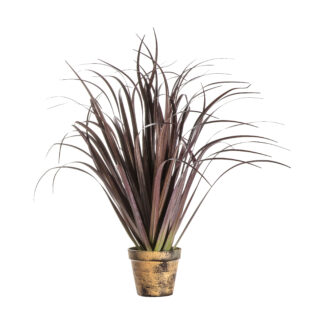 Potted Dracaena Autumn Red