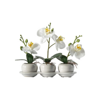 Orchid Trio with Ceramic Tray