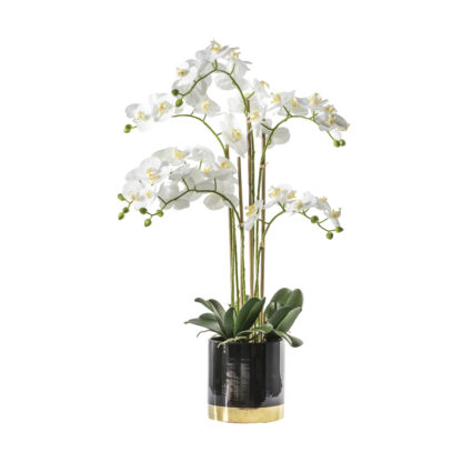 Orchid White with Black Gold Pot