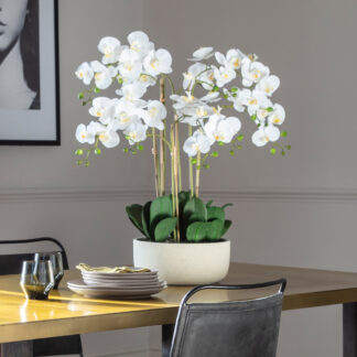 Orchid Bowl White Large