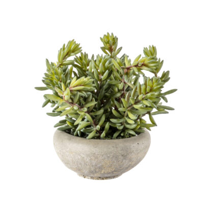 Sedum Green with  Cement Bowl Small