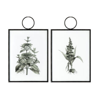 The Botanist Study II Hanging Art Set of 2