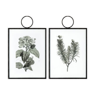 The Botanist Study I Hanging Art Set of 2