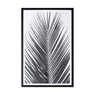 Monochrome Palm Framed Art