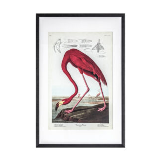 Curious Flamingo Framed Art