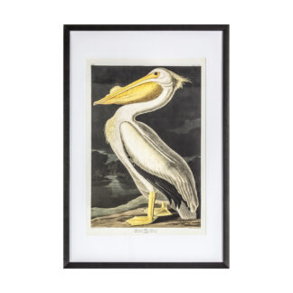 Inquisitive Pelican Framed Art