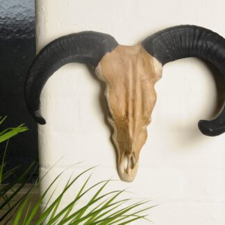 Vegan Hunting Trophy - Sheep Head with Black Horns