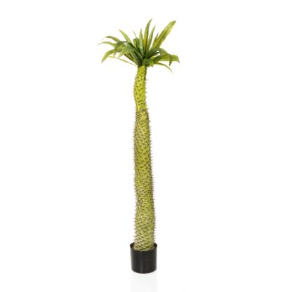 Faux Plant Tall Palm