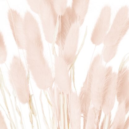 Dried Pale Pink Bunny Tail Bunch Of 60